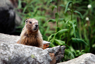 A marmot along the trail to Eagle Lake.