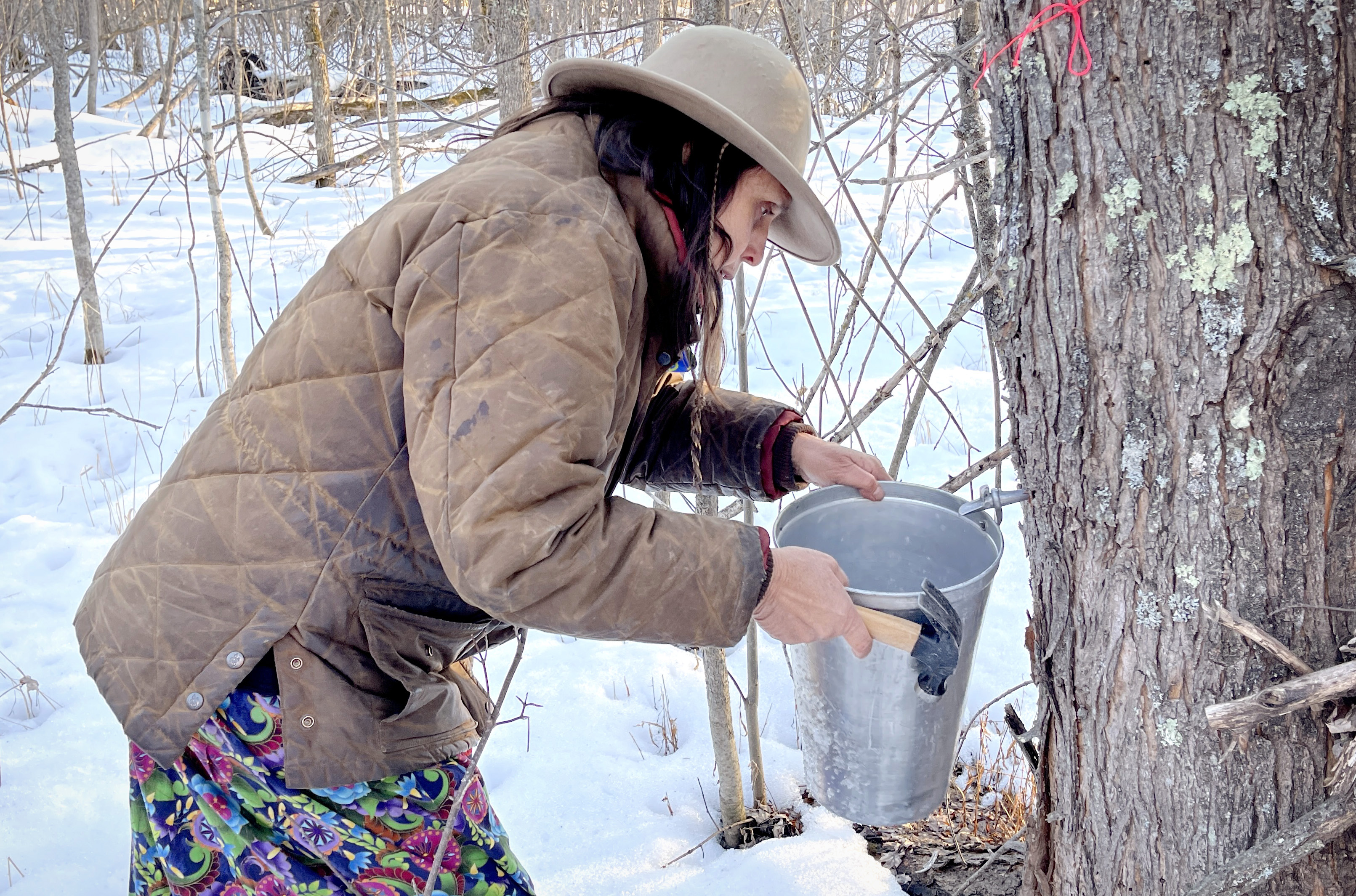 Winona LaDuke taps a maple tree near the Enbridge Line 3 pipeline during a ceremony in early March. Snow on the ground. Hammer in hand, holding a metal pal up to the tap.