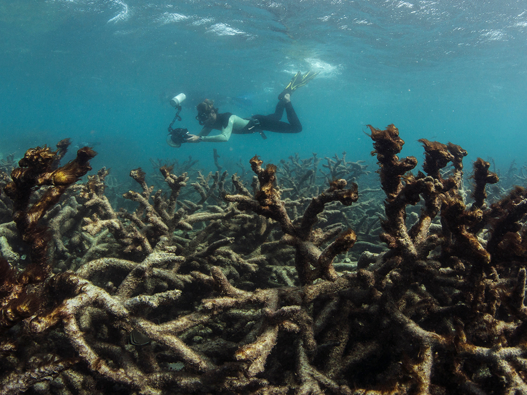 Dead coral covered in algae after the bleaching event, captured by the XL Catlin Seaview Survey at Lizard Island on the Great Barrier Reef in May 2016.
