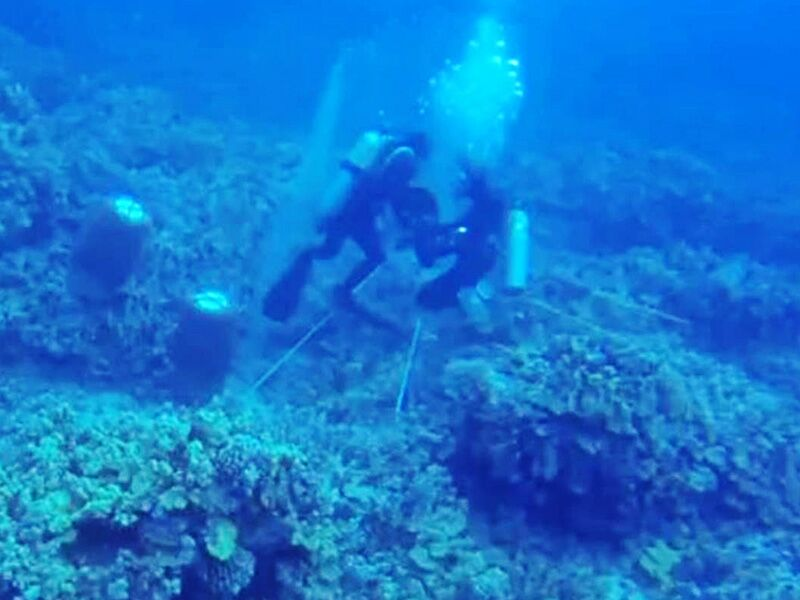 A man collecting aquarium fish off Hawaiʻi's Kona Coast attacks scuba diver Rene Umberger after she tried to film him.