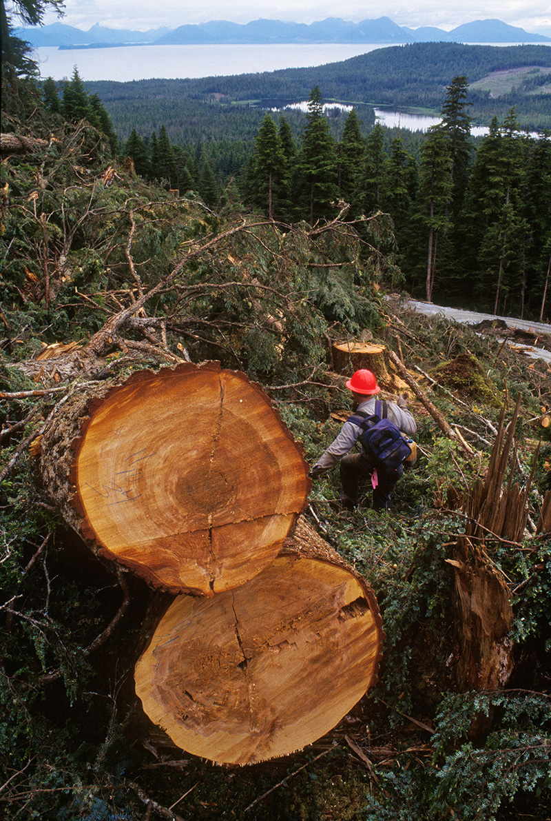 A logger climbs down a mountainside while working on Admiralty Island in the Tongass.