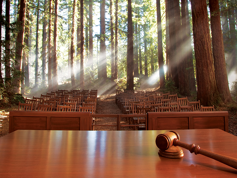 The forest courtroom.