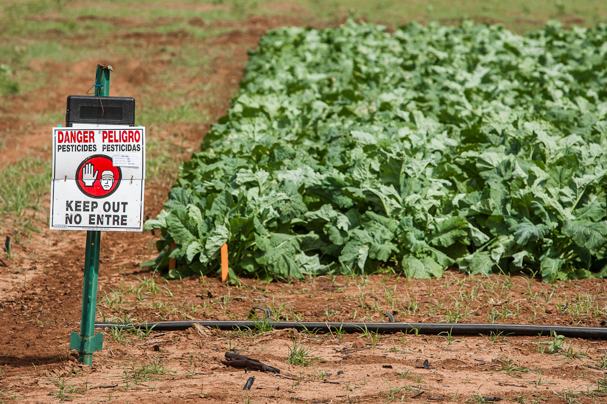 A danger sign warns of pesticides used in a field of GE crops