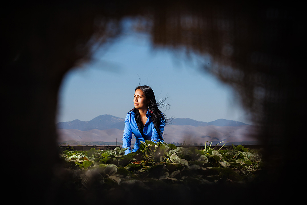 Santa Maria, CA. Olga Santos Returns To The Strawberry Field Where, As A  Young Girl, She Was