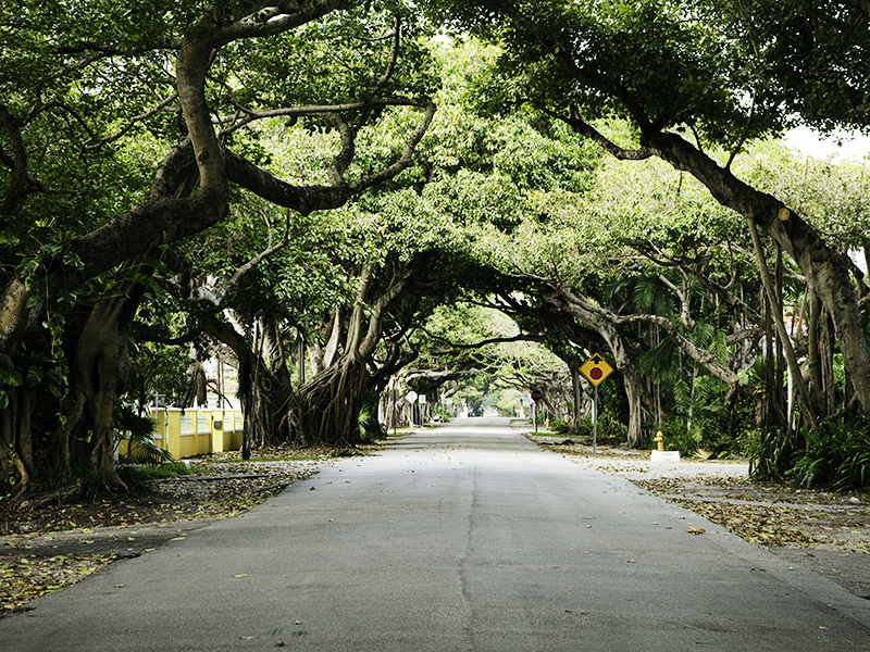 A street in Coral Gables