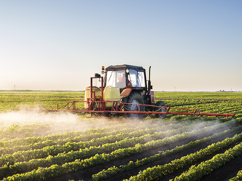 A tractor sprays a soybean field.