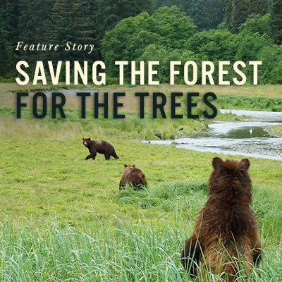 Feature Story: Saving the Forest For the Trees