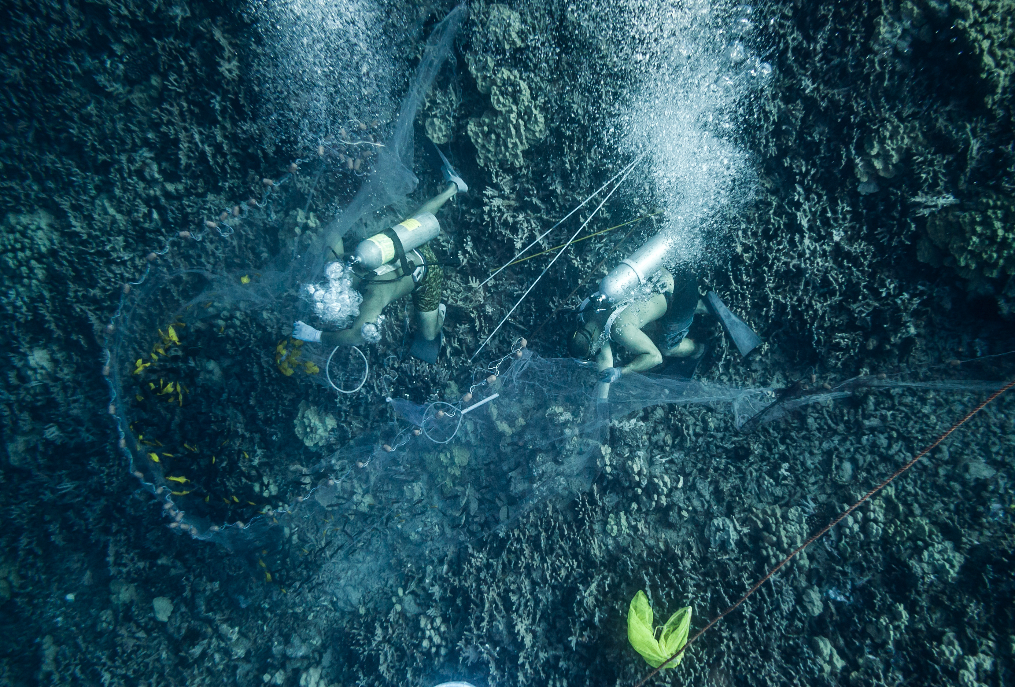 Aquarium collectors taking fish from a reef in Hawai'i.
