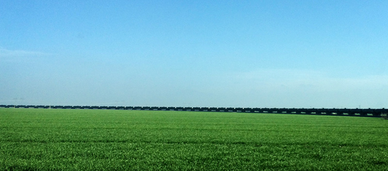 An oil train moves through the Central Valley.