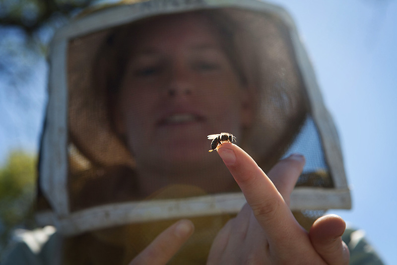 Alyssa Anderson, daughter of beekeeper Jeff Anderson, holds a baby bee.