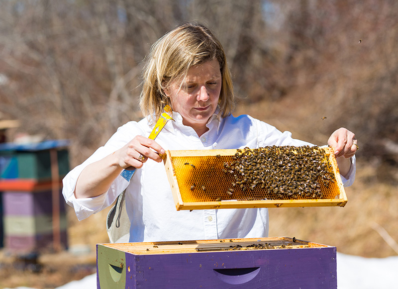 Erin MacGregor-Forbes tends to her bees in Maine.