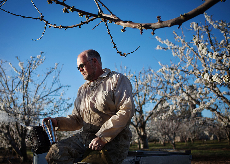 Beekeeper Jeff Anderson takes a quiet moment during the California cherry bloom.