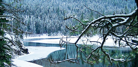 Winter comes to the South Siegel Roadless Area in Montana's Coeur D'Alene Mountains. (Terry Glase)