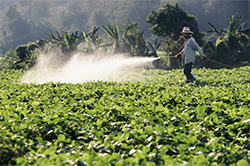 Pesticides being sprayed on a farmfield. (Toa55 / Shutterstock)
