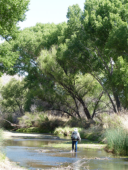 Dr. Robin Silver, along the San Pedro River. (Melanie Kay / Earthjustice)