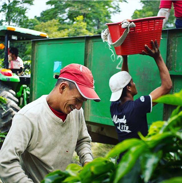 Workers on the Aquiares Estate