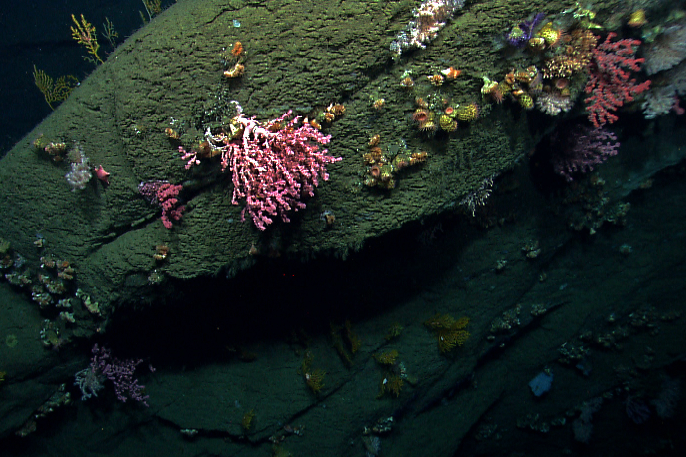 Hydrographer Canyon, off the coast of Nantucket, is a diverse habitat for deep-sea corals.