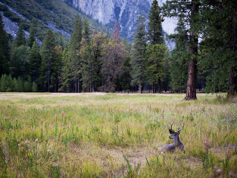 Our Public Forest Lands Are Under Attack Earthjustice