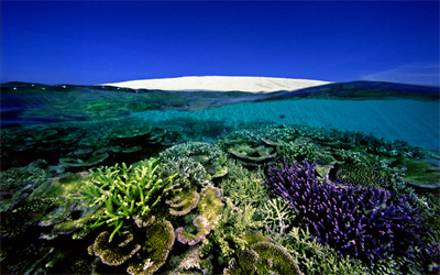Number 6, Sand Key, Great Barrier Reef. (David Doubilet / daviddoubilet.com)