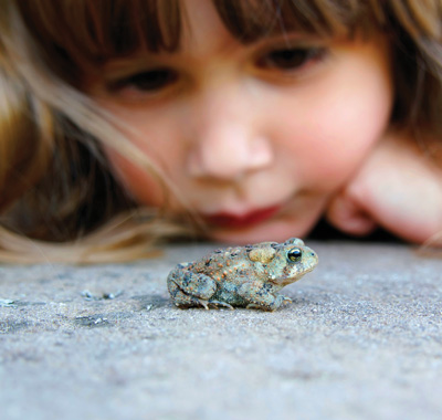 Girl watching frog.