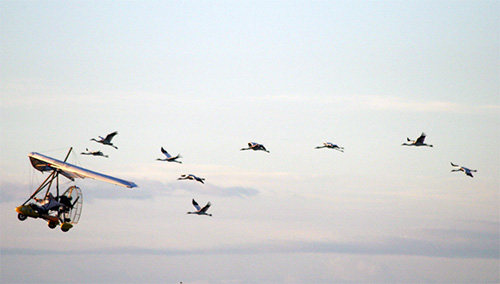 A 2010 training flight. (Photo Courtesy of Operation Migration)