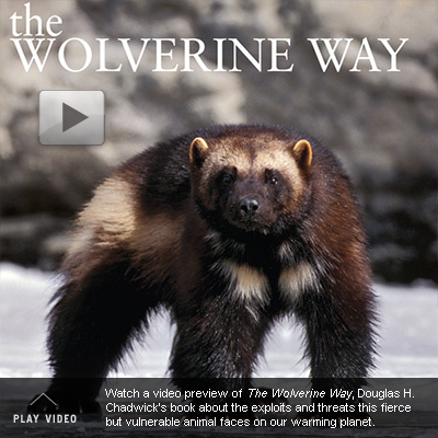 Cover of 'The Wolverine Way'.