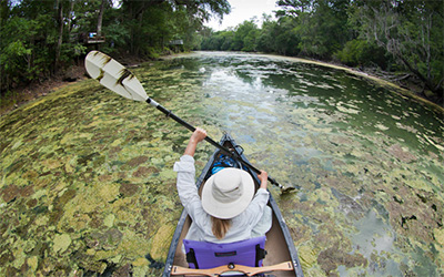 Boaters, anglers and swimmers heading to the spring-fed Santa Fe River near Gainesville, FL, encountered an outbreak of toxic green algae. (John Moran)