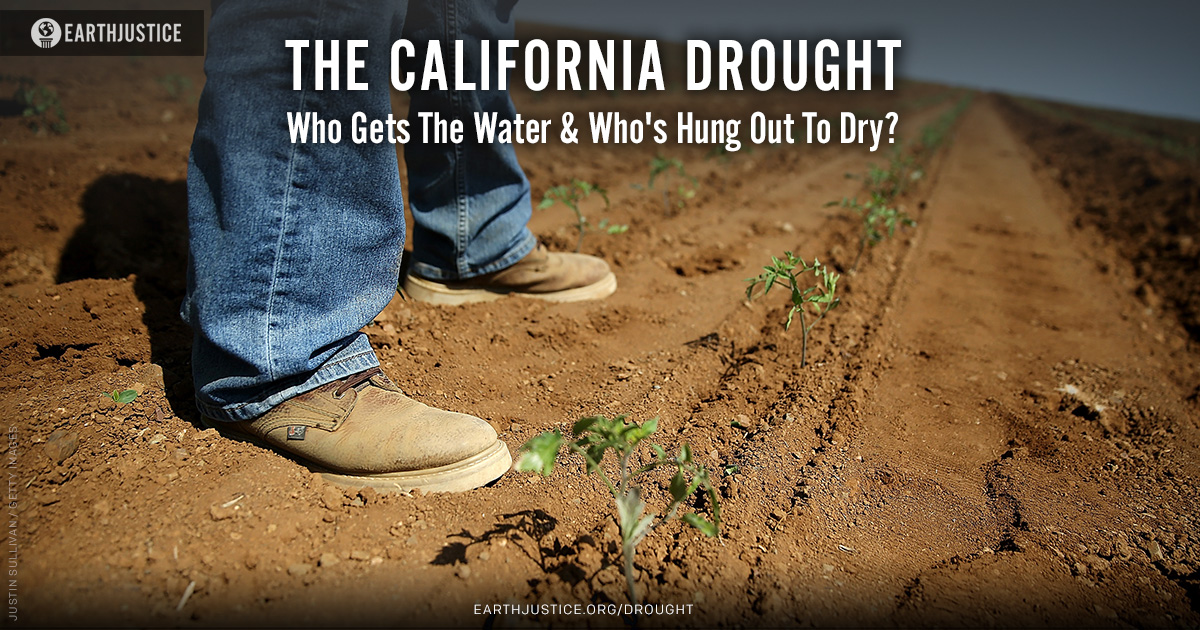 Need help with my thesis statement on California drought essay...?