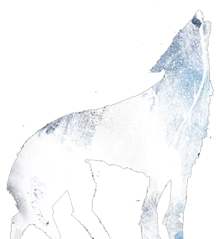 Illustration of a wolf by Daniel Egnéus.