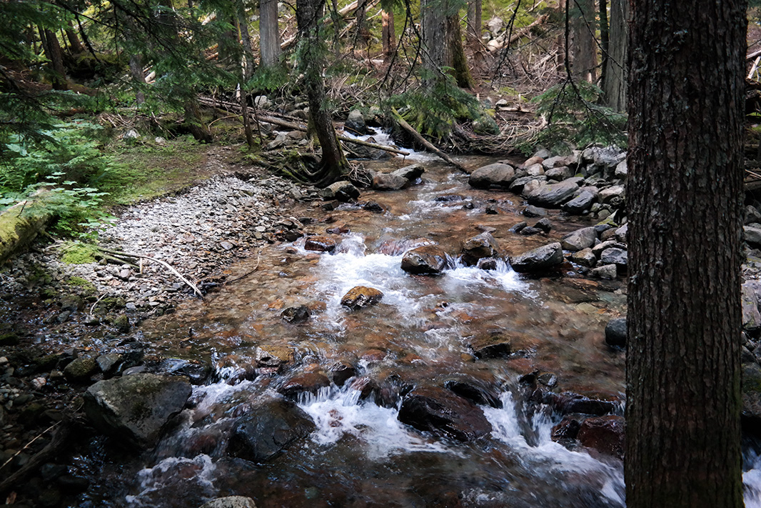 East Bull Fork River. If constructed, the Montanore Mine will drain water from this river, the area's most important bull trout spawning stream.