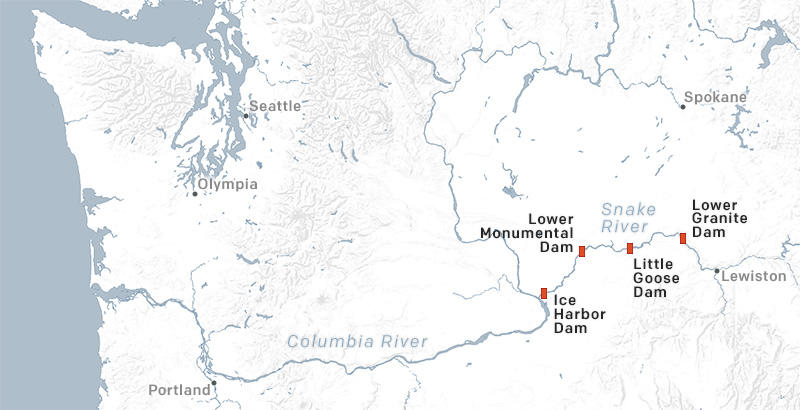The four Lower Snake River dams impede the migration of adult salmon attempting to return to the thousands of stream miles of clean, cold high elevation tributaries.