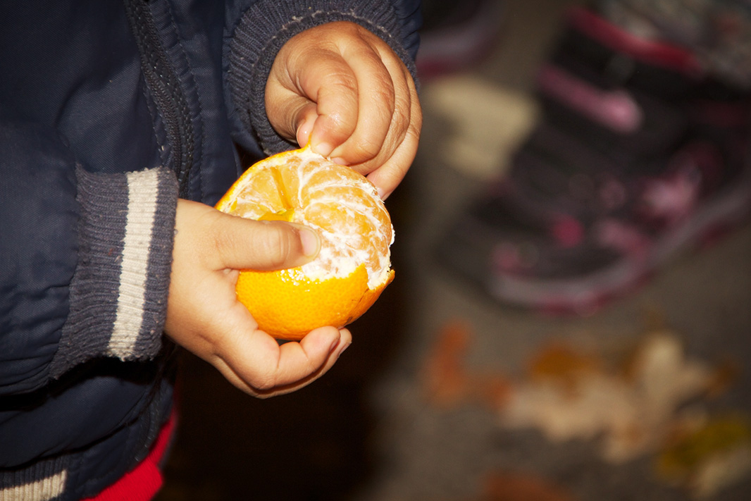 A child peels a clementine.