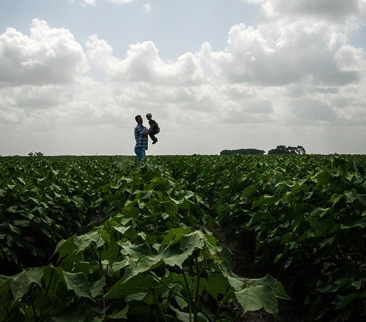 A father and son walk through a cotton field in El Campo, Texas.