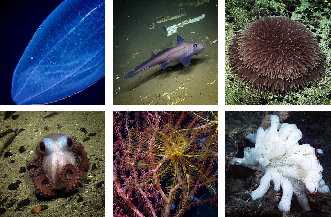Northeast Canyons and Seamounts Marine National Monument.