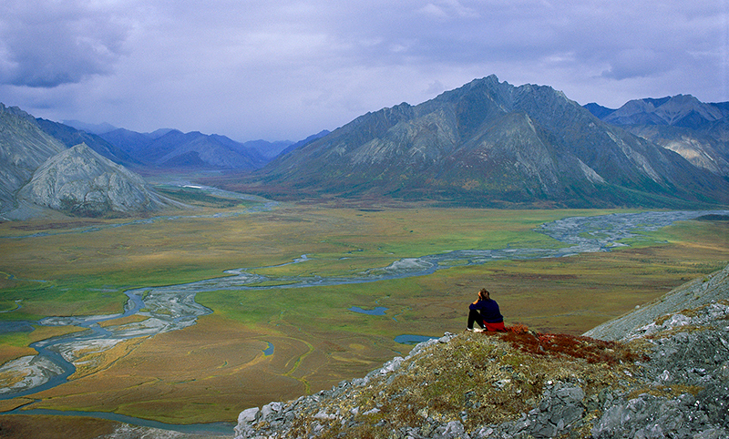Each summer, the Arctic Refuge shelters migratory birds from all 50 states and six continents.