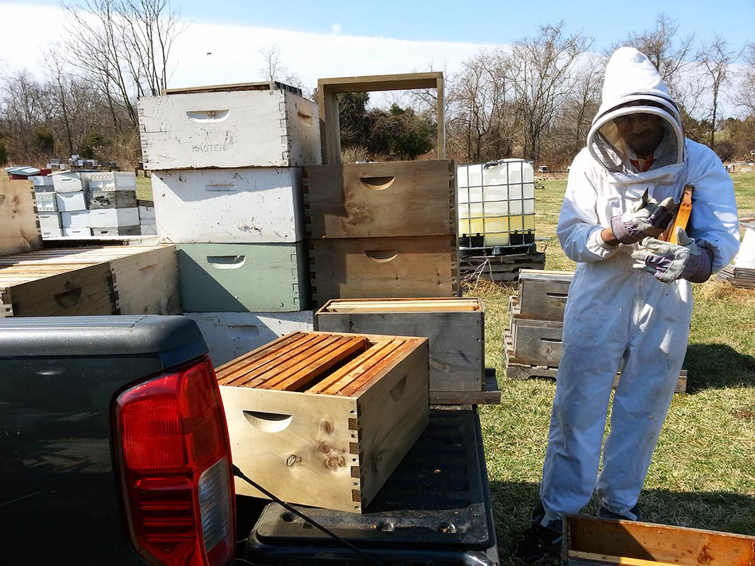 Charles Walters works in a West Virginia apiary.