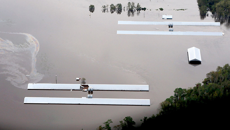 An industrial hog operation flooded by Hurricane Florence.