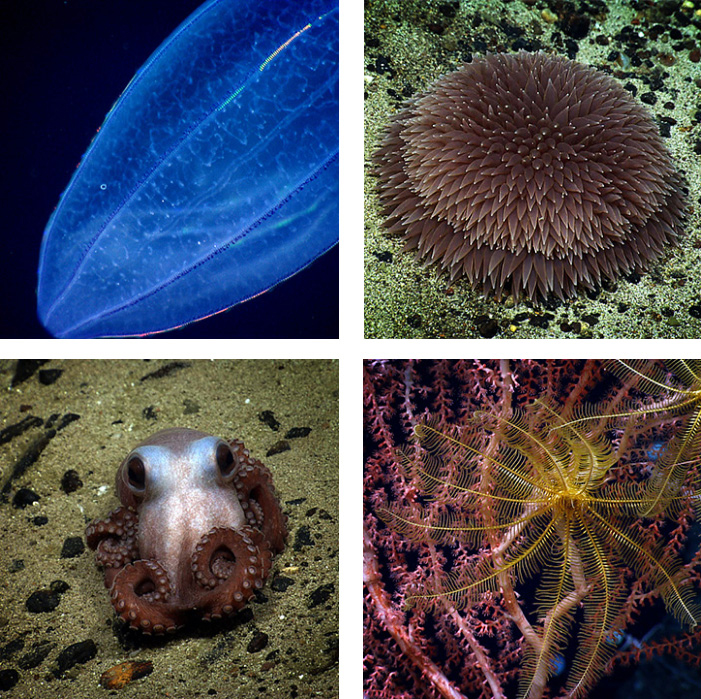 What You Should Know About The Northeast Canyons and Seamounts ...