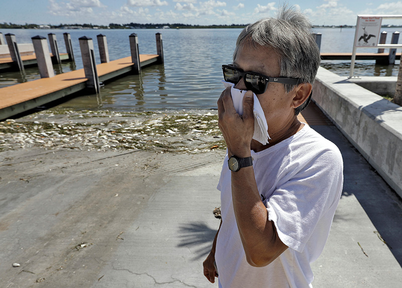 Alex Kuizon covers his face as he stands near dead fish at a boat ramp in Bradenton Beach, Fla., on  Aug. 6, 2018. Normally crystal clear water is murky, and the smell of dead fish permeates the air.