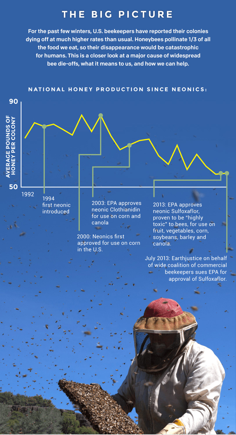 Infographic: Bees' Toxic Problem | Earthjustice