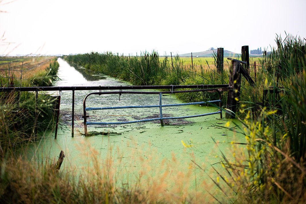 Algae blooms in irrigation canals in the Klamath Basin. August 19, 2018.