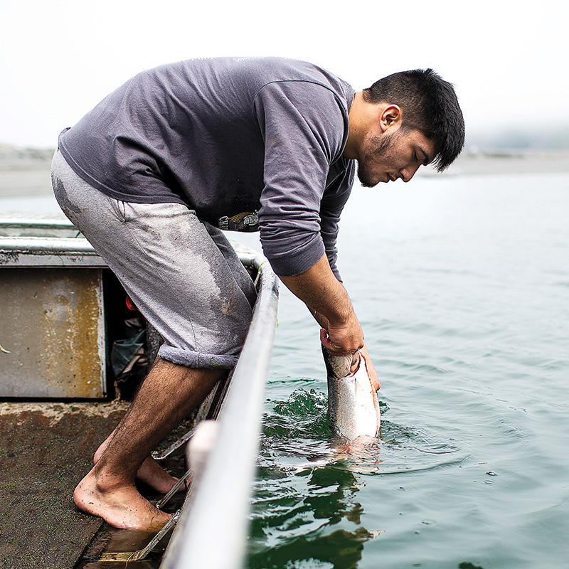 A salmon caught in Ta-Tes Boulby's net is pulled out of the Klamath River.