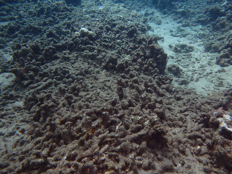 Coral damage resulting from wastewater effluent seeps offshore of Kahekili Beach Park on Aug. 19, 2019.