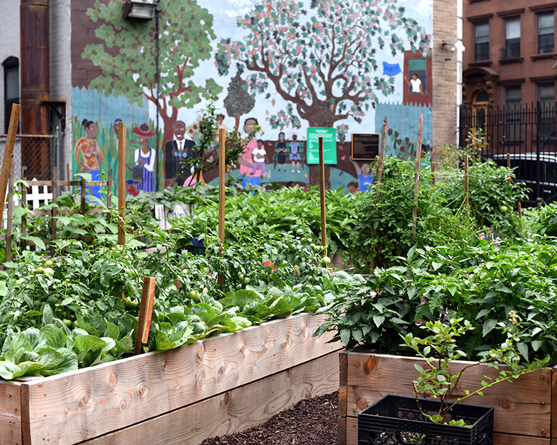 Multiple raised garden beds brimming with vegetables at Harlem Grown Community Garden.
