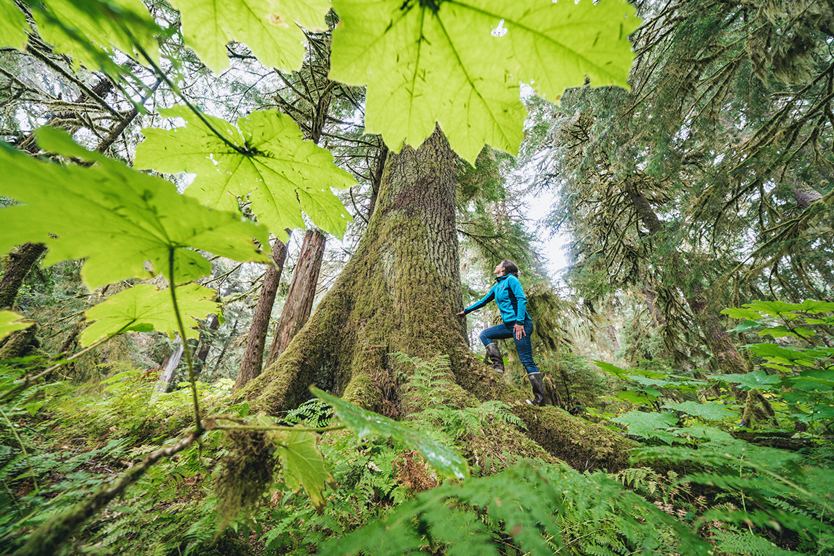 The ancient trees on the Tongass National Forest's Prince of Wales Island.