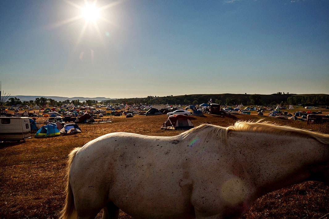 Close up view of the body of white horse. In the background are numerous tents scattered across a vast camp.