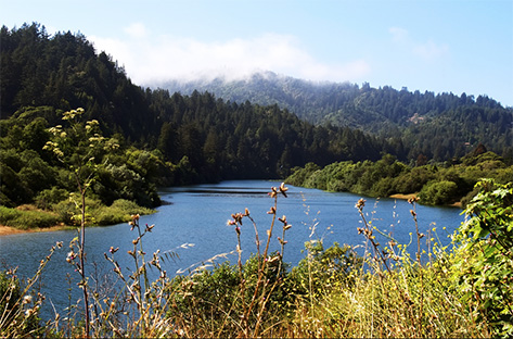 The Russian River, near Duncan Mills. (Ingrid Taylor)