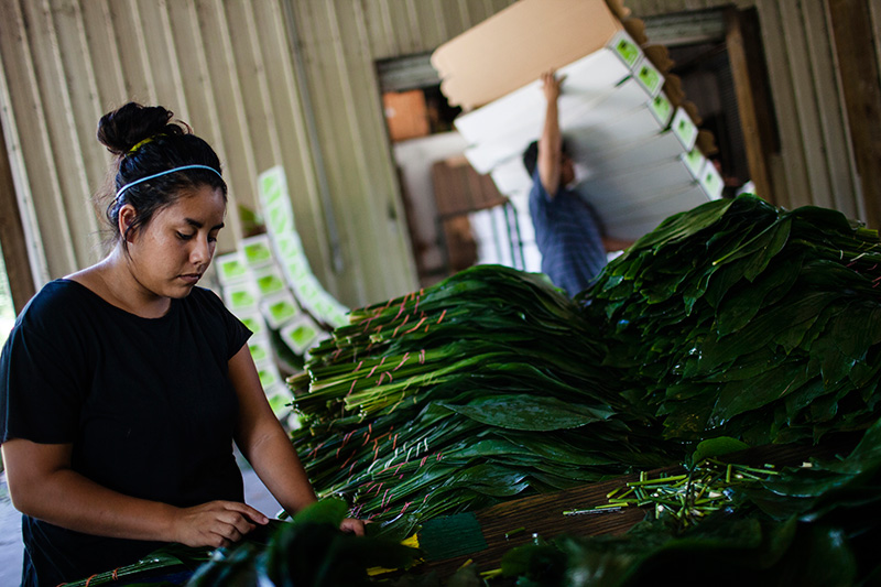 In Pierson, FL, workers pack greenery, which are exported worldwide for use in floral arrangements and other decorations.