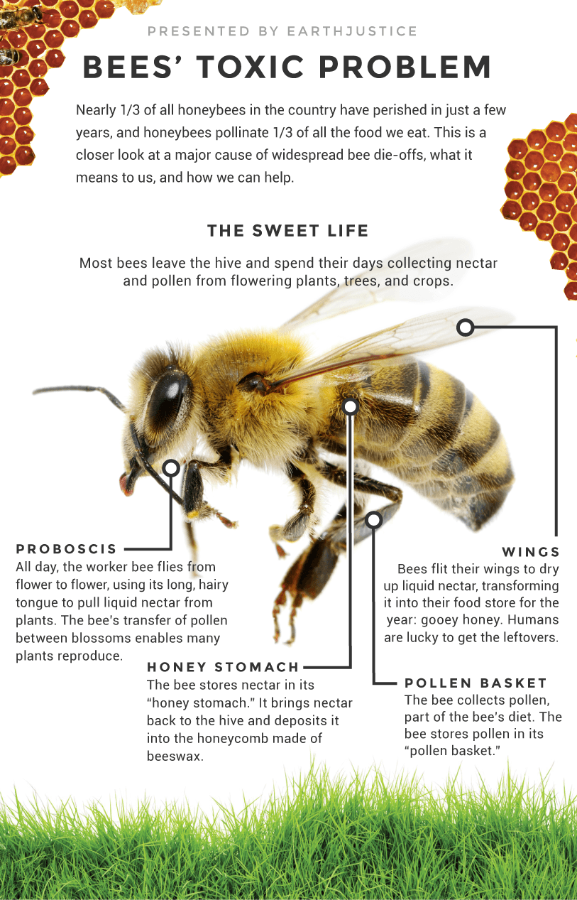 Bee infographic part 1