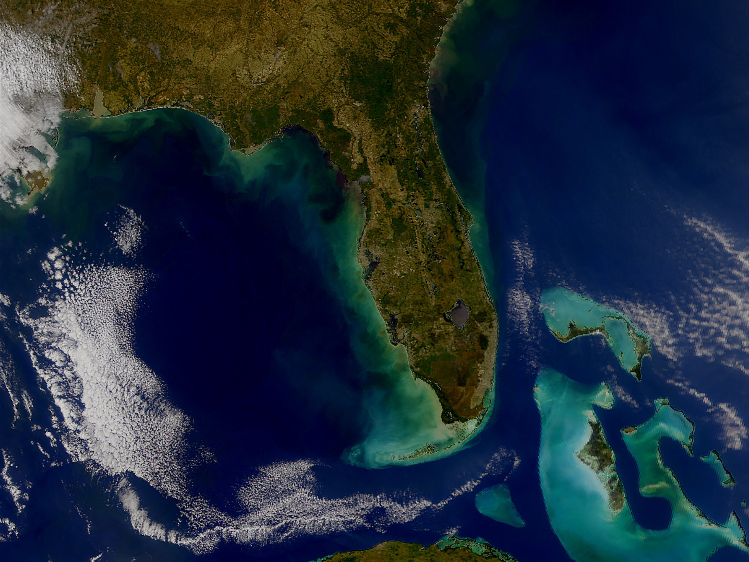 Algae blooms off the coast of Florida